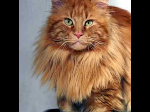 Top 10 Cat breeds