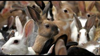 КРОЛИКИ хотят кушать!!! ОЧЕНЬ СМЕШНОЕ ВИДЕО!!! Прикол!!!(приколы, приколы 2012, приколы 2013, приколы с животными, приколы 2014, приколы 2011, приколы над людьми, приколы..., 2014-09-04T11:55:27.000Z)