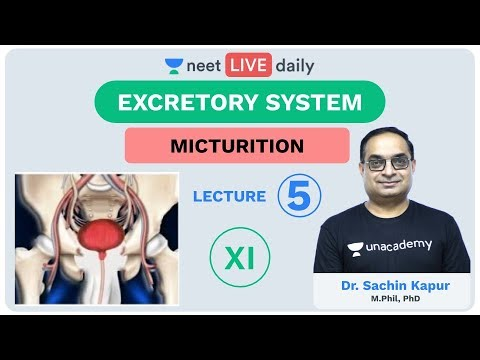 excretory-system---lecture-5-|-unacademy-neet-|-live-daily-|-neet-biology-|-dr.-sachin-kapur
