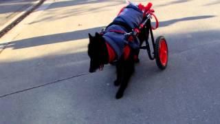 犬の車椅子・ネコの車椅子を製作しております。