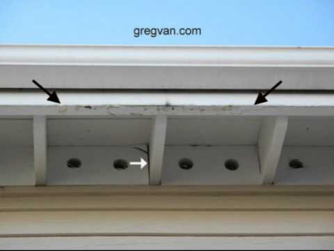 Termite Damage Water Damage And Excellent Home Repair