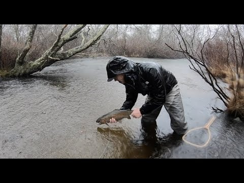 Deadly Trout Tactics From The Pros