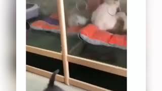 Кот, как вода? 💧