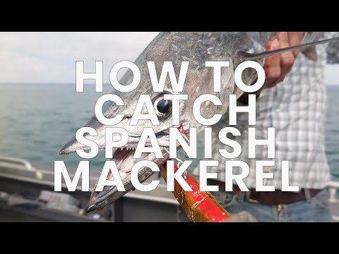 How to catch spanish mackerel- Hooked Up Video