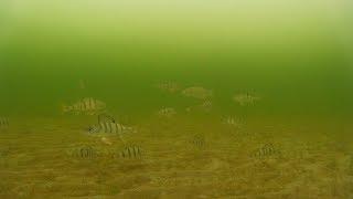 Последний Лёд 2020 Весенняя Рыбалка В Области Подводная Съёмка