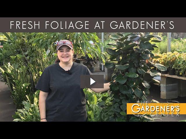 9/4/2020 Fresh Foliage with Joy