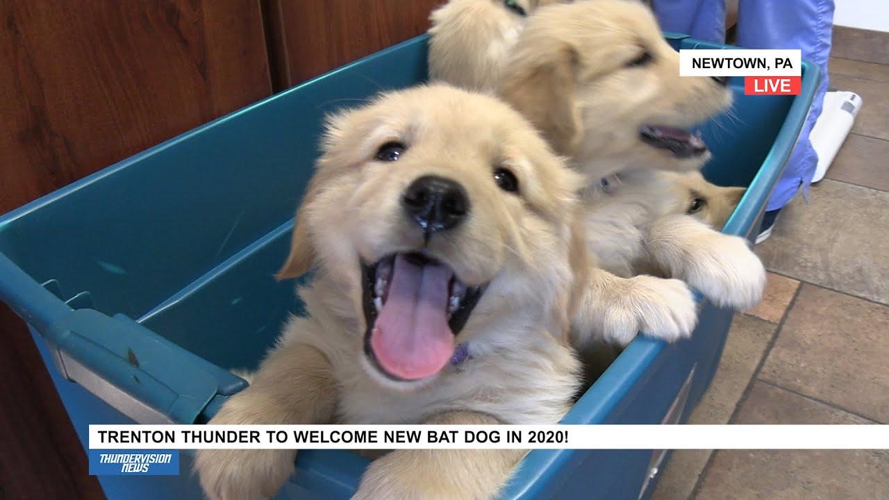 Thunder to Welcome New Bat Dog in 2020! | Trenton Thunder - YouTube
