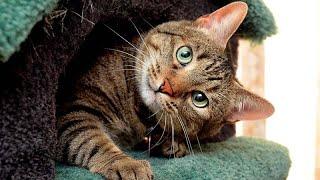 За нарушение правил содержания кошек и собак будут штрафовать