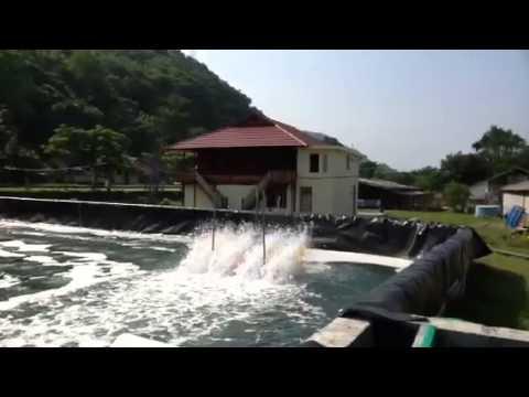 Tambak Udang vaname Supra intensif Indonesia di Barru