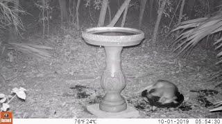 Armadillo Goes for a Dip || ViralHog