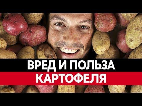 ВРЕД И ПОЛЬЗА КАРТОФЕЛЯ. Картофель фри. Сухое картофельное пюре
