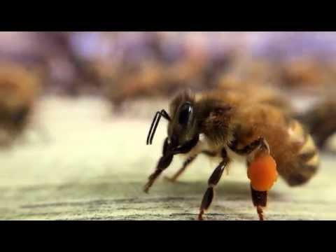 Bee pollen slow motion Flow™ Hive
