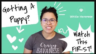 Where to get a Havanese? Should you get a puppy in 2020? | Wittle Havanese