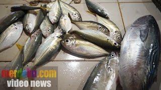 Ini cara mengecek ikan berformalin atau tidak
