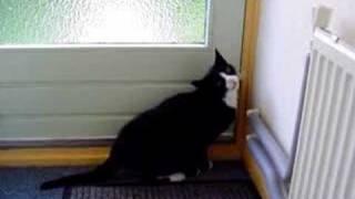 mijn kat gompie