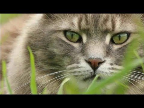 Вопрос: Могут ли животные лечить человека?