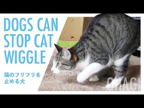 猫のフリフリを止める犬