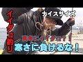 【テンヤ】真冬のイイダコ釣りに挑戦!産卵期のイイダコは良型揃い!