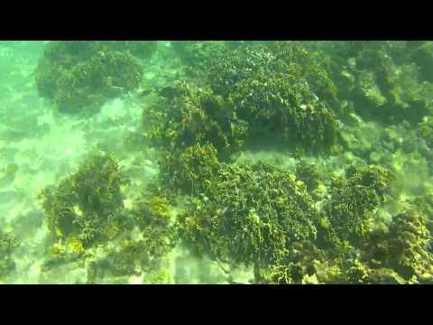 snorkeling-en-playa-el-faro-mochima-venezuela