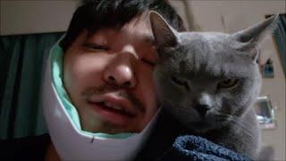 術後、悪化した飼い主を慰めてくれる灰色猫すずまろ