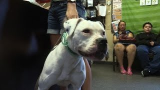 Animals find new home after Hurricane Matthew