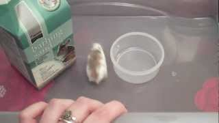How To Give Your Hamster A Sand Bath: Tips