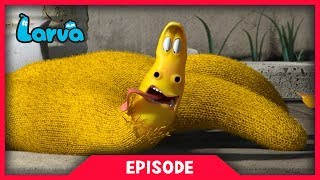 LARVA - GLOVE | Cartoon Movie | Cartoons For Children | Larva Cartoon | LARVA Official