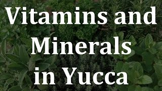 Vitamins and Minerals in Yucca - Health Benefits of Yucca