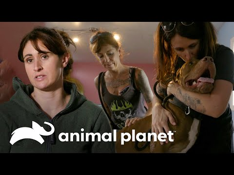 Como resgatar 3 cães no estilo Villalobos | Pit bulls e condenados | Animal Planet Brasil from YouTube · Duration:  6 minutes 44 seconds