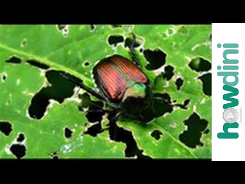Organic pest control - Natural bug and insect repellents
