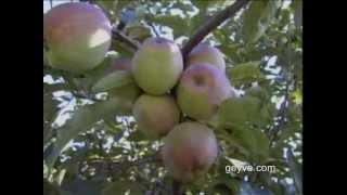 Geyve Tanıtım (2005) / Geyve.com