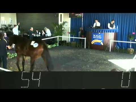 2013 Perth Winter Yearling Sale