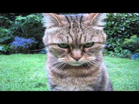 Angry Cat Pictures Images Photos Cute Animals YouTube - Garfi is officially the worlds angriest cat