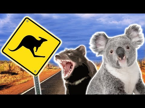 australian-animals-|-animals-for-kids-|-weird-wild-animals