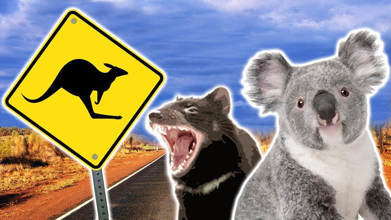 Australian Animals   Animals for Kids   Weird Wild Animals