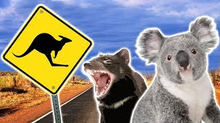 Australian Animals | Animals for Kids | Weird Wild Animals