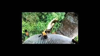Chinh Phục Cây Cao Có  Tổ  Ong Khoái Khủng  | Người Rừng Xứ Nẫu