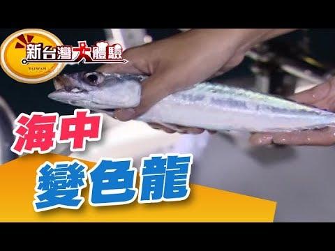 釣魚必殺餌紅蟲 捕撈海中變色龍《新台灣大體驗》第155集 廖慶學