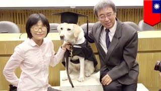 Seeing eye dog gets graduation ceremony from university before his retirement - TomoNews