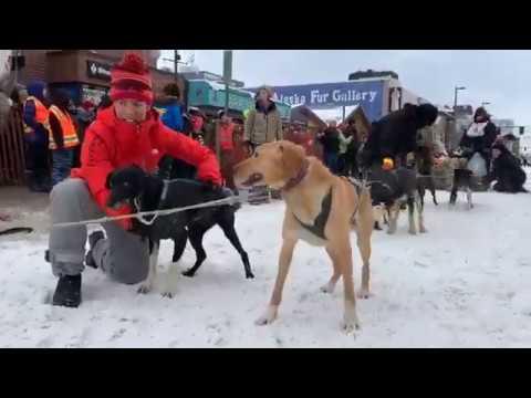 February 26, 2020 FUR RONDY ONLINE | Alaska Auction Co