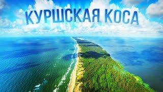 КУРШСКАЯ КОСА! Обзор трэш-гостиницы, лучший пляж в России, почём убить лося, кольцевание птиц