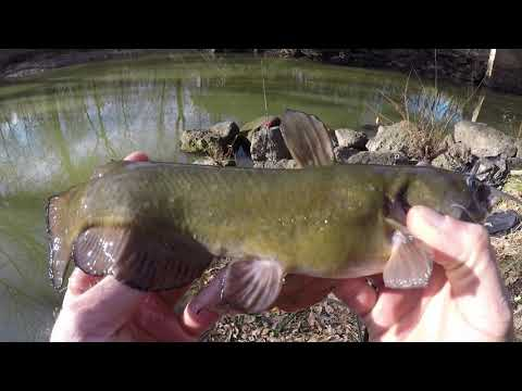 Fishing For Catfish, Bullheads, Bluegill, And Goggle Eye In A Small Creek