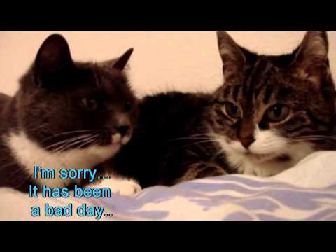 The two talking cats with subtitles!