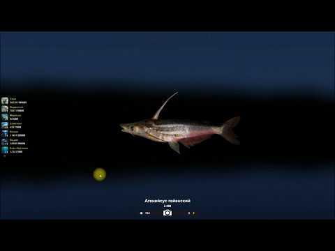 Агенейсус гайанский, открытие локации Паракари в игре Трофейная рыбалка 2