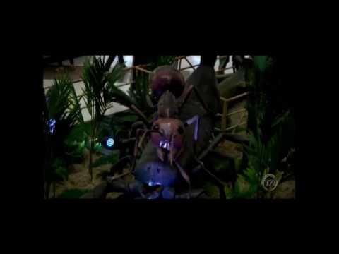 0e67700f37 Shopping apresenta exposição de insetos gigantes - YouTube