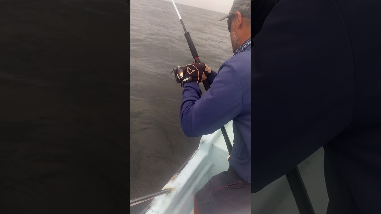 jigging amberjack