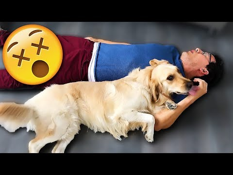Thumbnail: Playing Dead with CHICA!!