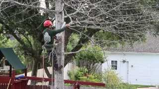 Shade Tree Arbor Care -tree Removal Spring Texas