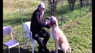 Growth Of Irish Wolfhound. Dagda Mor 5 Months Old.