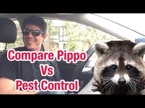 COMPARE PIPPO VS PEST CONTROL PRANK CALL!
